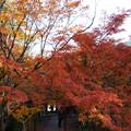 円通寺 境内の紅葉_04