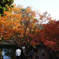 Photos: 円通寺 境内の紅葉_05