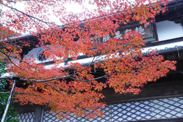 円通寺 本堂の紅葉_01