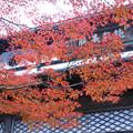 Photos: 円通寺 本堂の紅葉_01