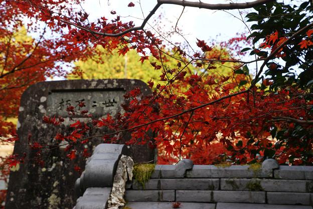 Photos: 円通寺 境内の紅葉_10