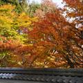 Photos: 円通寺 境内の紅葉_11