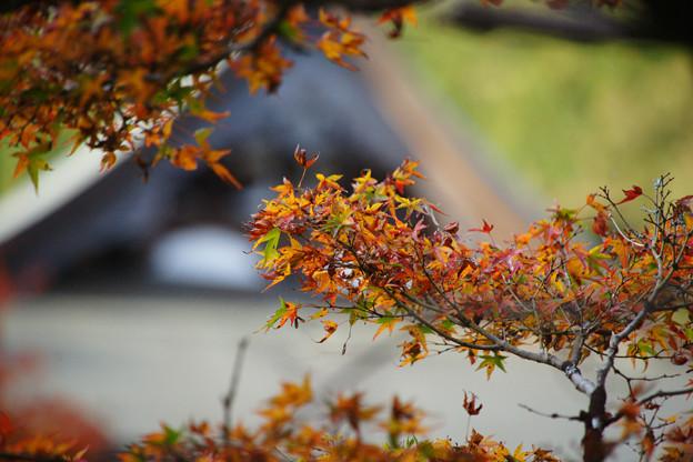 Photos: 円通寺 境内の紅葉_20