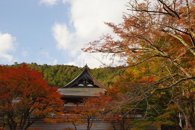 Photos: 円通寺 境内の紅葉_21