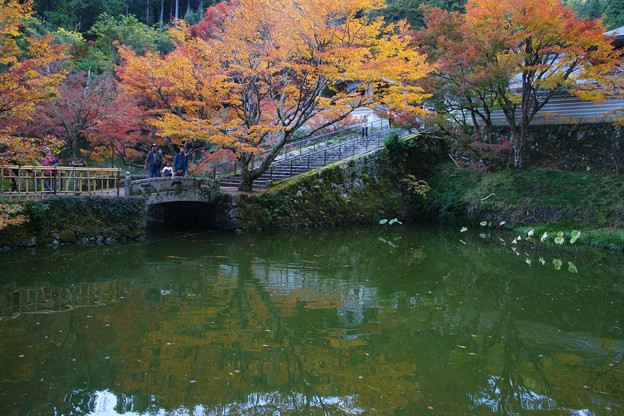 円通寺 放生池の紅葉_01