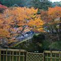 Photos: 円通寺 放生池の紅葉_02
