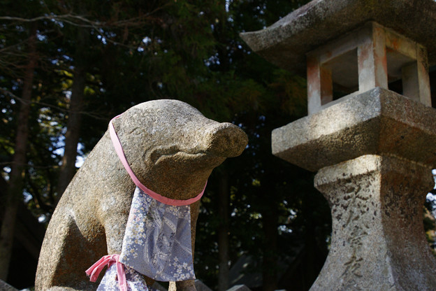 千光寺 猪の狛犬_01