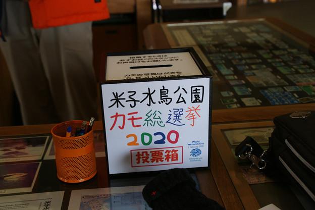 米子水鳥公園カモ総選挙2020_01