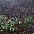 高山植物園 笹の山