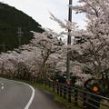 Photos: 川代公園の桜_02