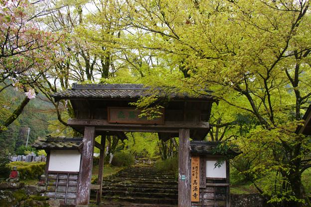高源寺の新緑_01