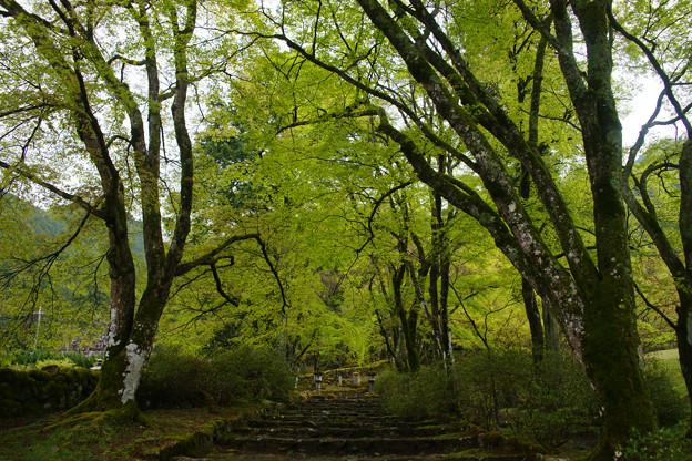 高源寺の新緑_02