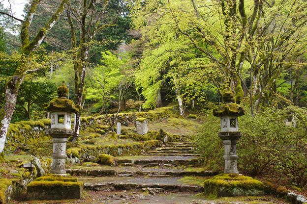 高源寺の新緑_03