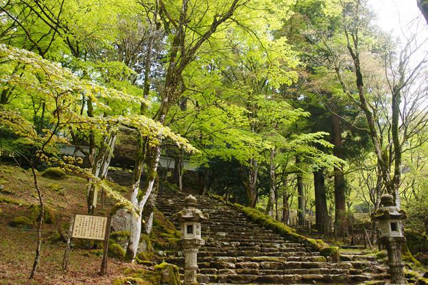 高源寺の新緑_05
