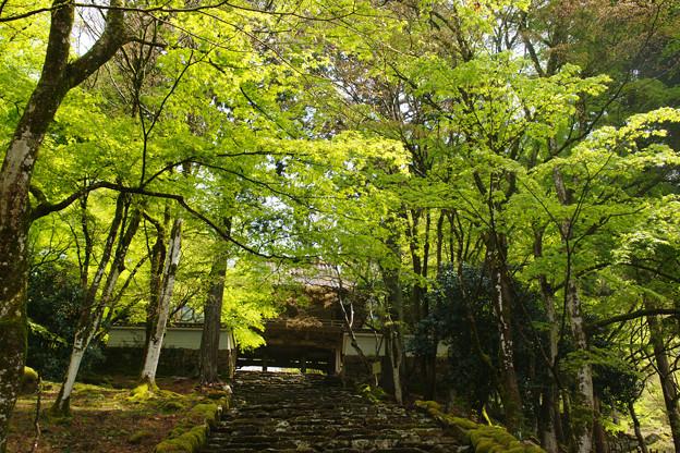 高源寺の新緑_06