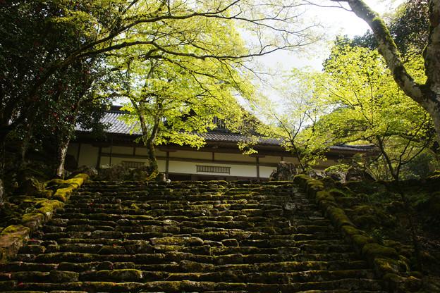 高源寺の新緑_07