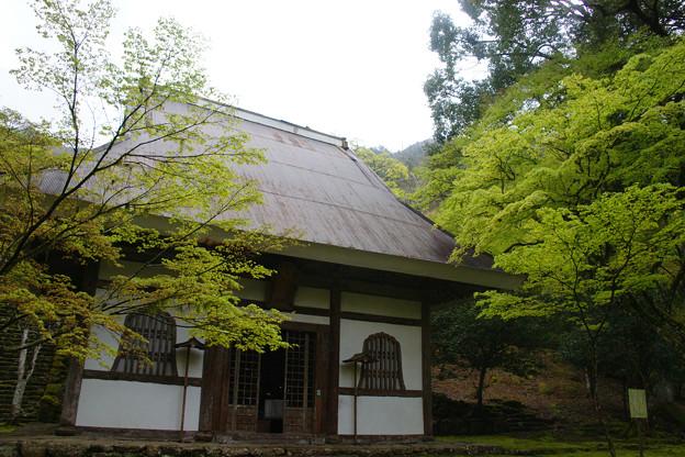 高源寺 仏殿の新緑