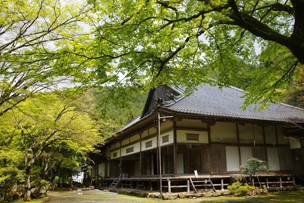 高源寺 方丈の新緑