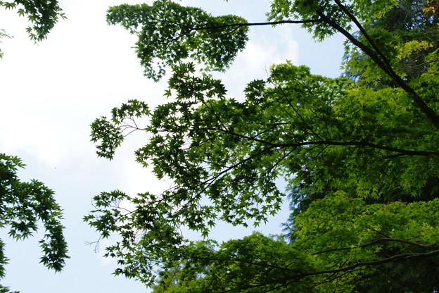 森林植物園の新緑_01