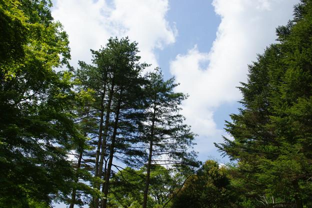 森林植物園の新緑_02