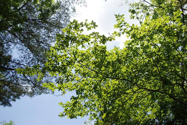 森林植物園の新緑_03