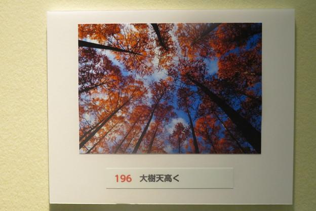 Photos: フォトコンテストお気に入り作品_01