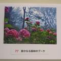 Photos: フォトコンテストお気に入り作品_04