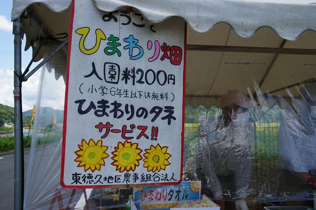 ひまわり畑入口_01