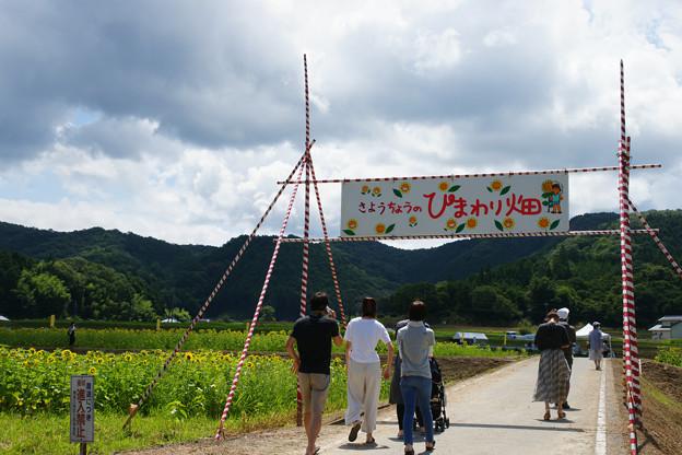 ひまわり畑入口_02