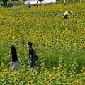 Photos: ひまわり畑散策