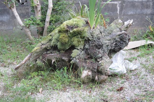 岩国の家 木の根