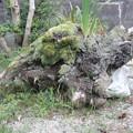 Photos: 岩国の家 木の根