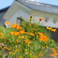 Photos: 秘境 小河の里_02
