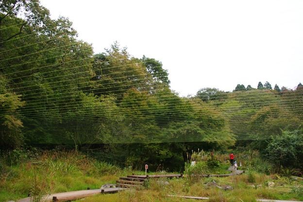 水糸の庭_01