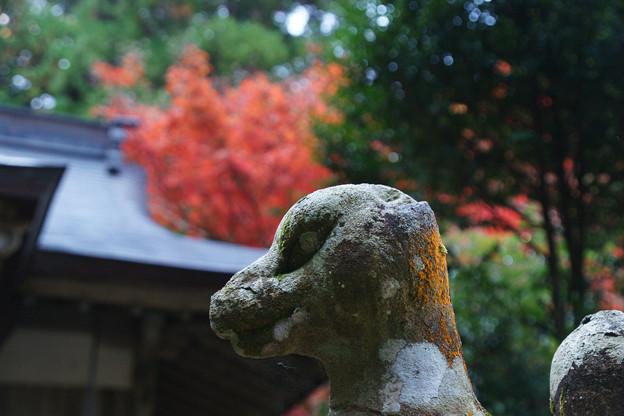 稲荷神社の紅葉_02