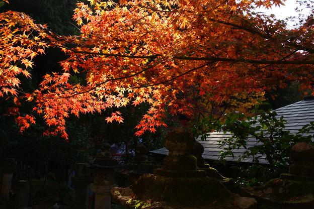 宗鏡寺の紅葉_05