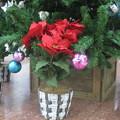 Photos: サンチカ クリスマスツリー_02