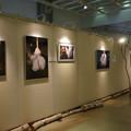 Photos: シモバシラ展