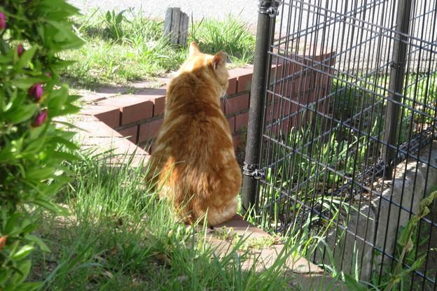UR名谷団地の野良猫
