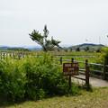 米子水鳥公園 観測桟橋