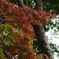 秋草の小径 紅葉_01