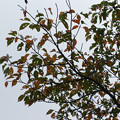 秋草の小径 紅葉_02
