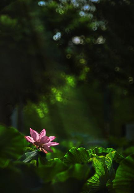 写真: 晨光灑落