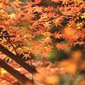 秋の夕日~に~♪