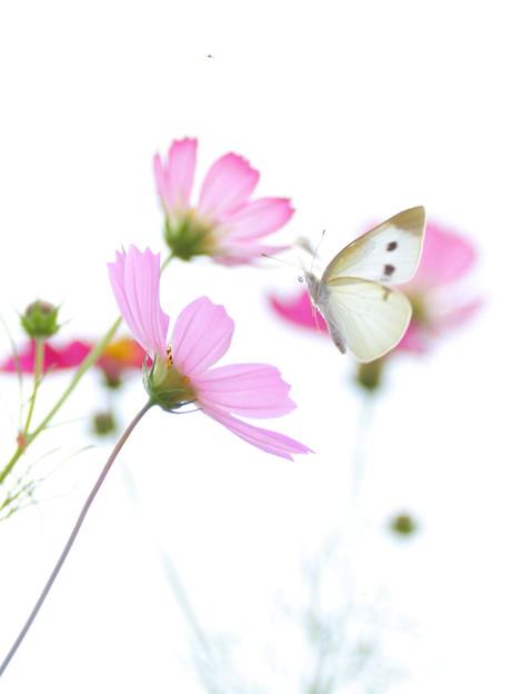 ただそこに花は咲き 蝶は飛び