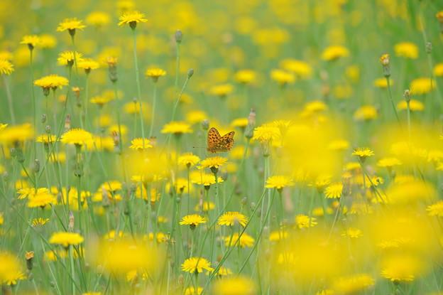 Photos: Yellow Paradise