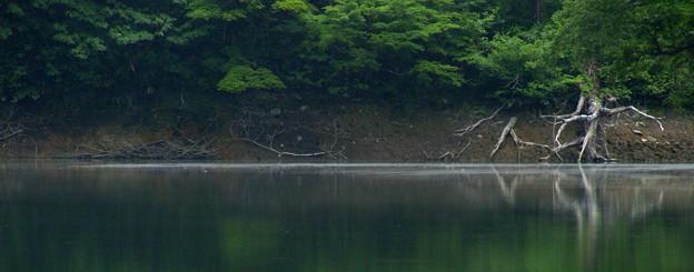 Photos: 森人