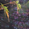 降り注ぐ虹の子供たち