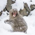 写真: winter fun