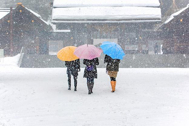 Companion in winter